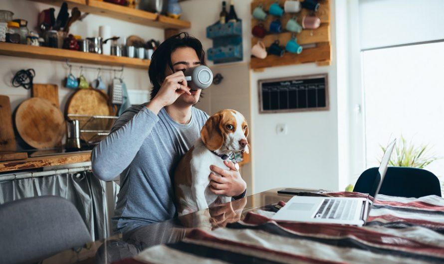 Quand donner à manger à son chien ?
